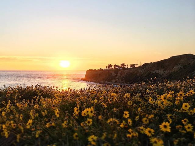 I ️ California.
