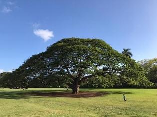 Sunday funday. #この木なんの木気になる木 #日立の木